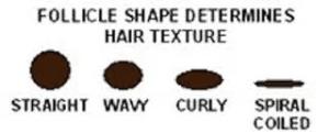 Follicle Shape