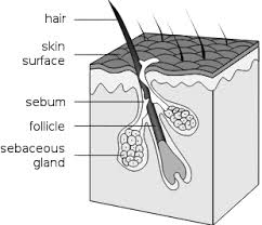 Hair Structure 2