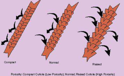 Hair porosity image