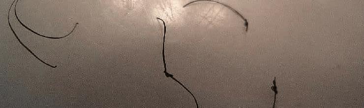 Broken Hair Pieces