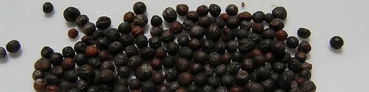 Broccoli Seeds